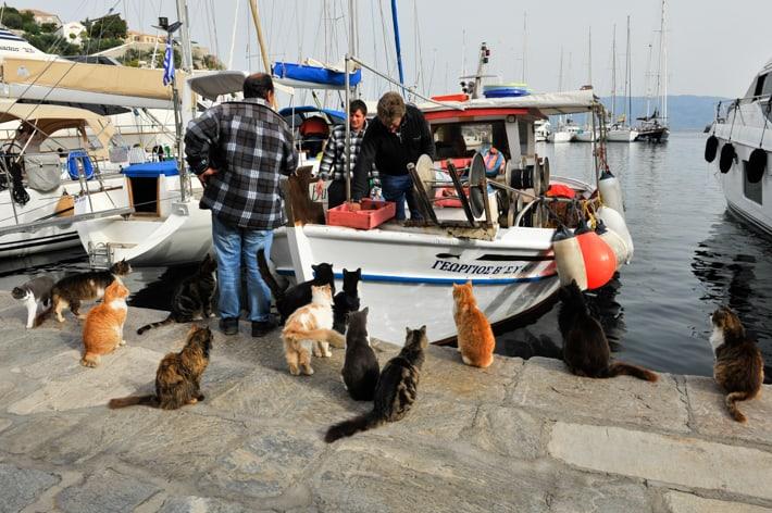 Hydra koty rybacy i ryby