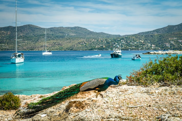 paw na plaży wyspa Moni Grecja