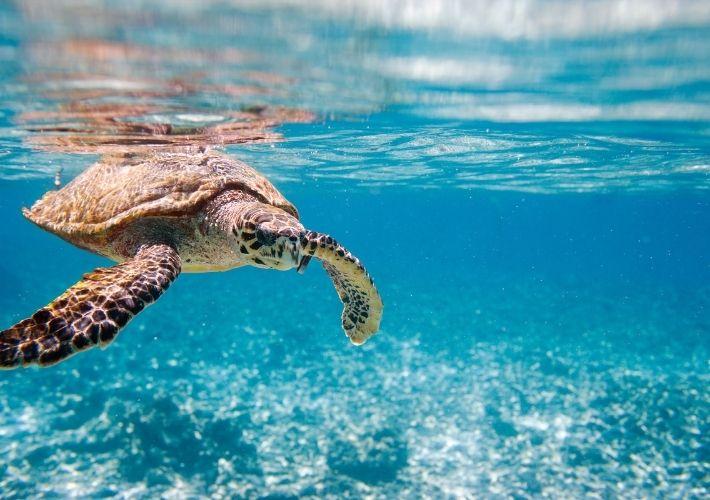 żółw na seszelach